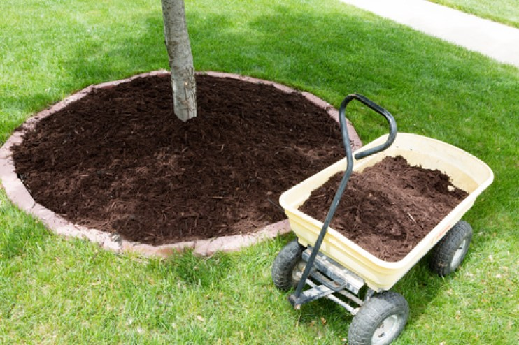 Mulch around a sapling tree concealing the root flare