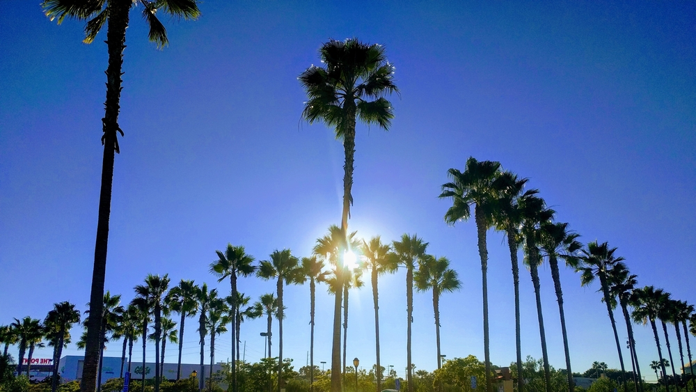 Wonderful vista of palm trees in Florida