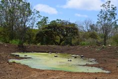 Amazonas 2 och Galapagos 1 467_copy