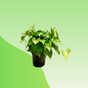 Money Plant Online