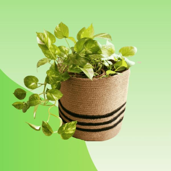 Buy jute planter online bd