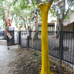 'Canopy' Pine Street
