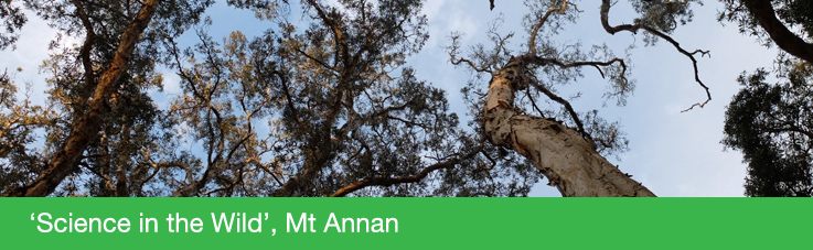 Mount Annan