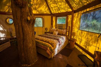 Cedar tree growing in the center of the of an Aurora treehouse with a queen bed