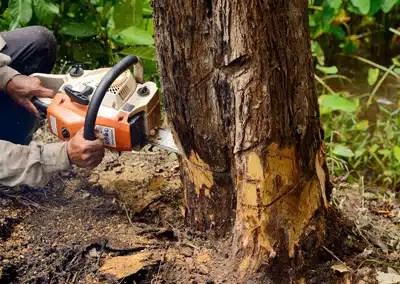 tree removal indicator