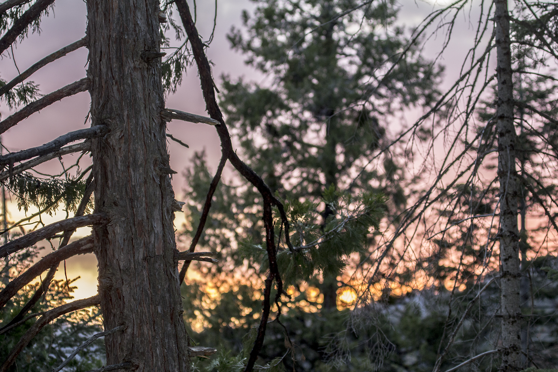 __1 a redwoods