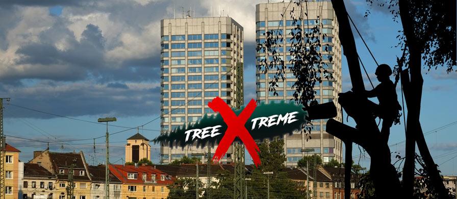 Baumpflege Mainz | treeXtreme Baumkletterer Mainz