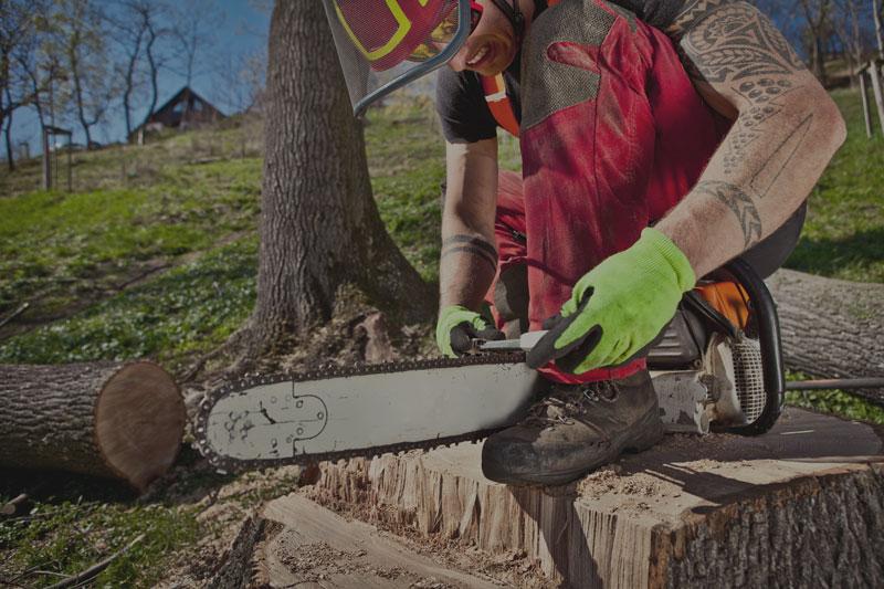 treeXtreme | Baumkletterer für gute Baumpflege