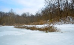 brush piles for fish habitat at Treasure Lake, Kentucky, USA, 2011