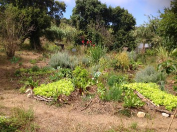 Terra Alta Forest Garden, Portugal, 2013, mix of vegetables and young trees