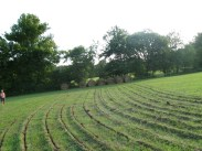 Keyline pasture renovation, Tennessee, USA, 2009