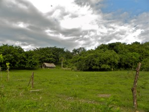 Taino Farm Pasture and Native forest hillside in the background