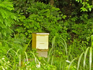 """One of the seven bee boxes on the forest edge, its """"winter"""" and raining so we leave the honey for them"""