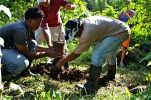 The farm crew planting a Rhambutan tree