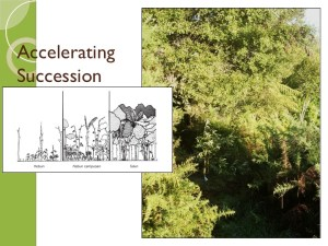 Accelerating Succession