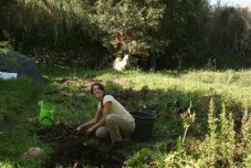 valentina working hard with a feijoa tree in the citrus grove