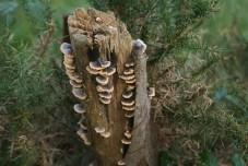 mushrooms decaying wood
