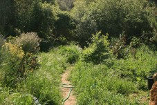Camino das fades looking jungly in late spring