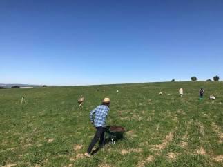 wheat field plantings