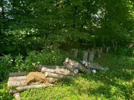 turning maple thinnings into mushroom logs, Treasure Lake, KY