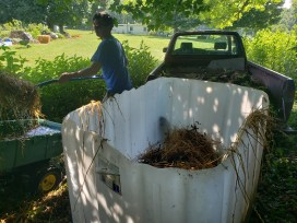 worm bin startup in a 275 gallon or 1000 L tank, Treasure Lake, KY