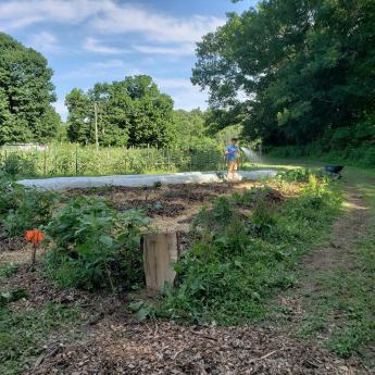 Edge garden freshly planting with annual vegetables, perennial vegetables, fruit trees, berry bushes and climbers, and inoculated wood chip mulch for wine cap mushrooms, 2018 summer