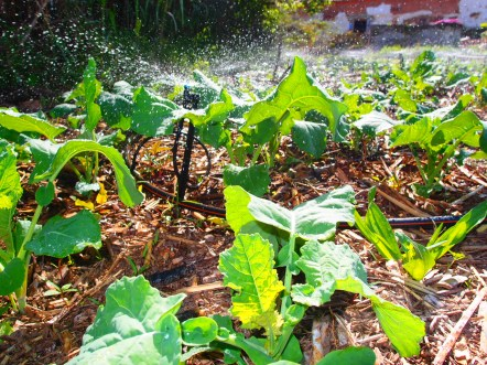 emitters-of-irrigation-water-at-heredade-de-lage