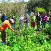 food forest workshop, Portugal