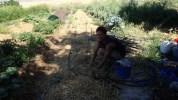 Julien working hard on irrigation lines one fine morning
