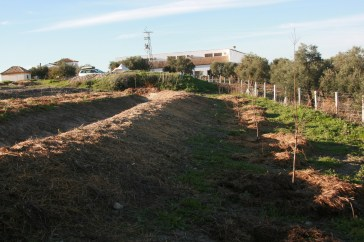 planting tree crops below the large bottom swale