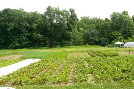 Middle of the farm shot showing diversity of crops, Dark Wood Farm at Treasure Lake