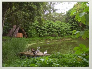 Pond 2 of our dual aquaculture ponds in Costa Rica