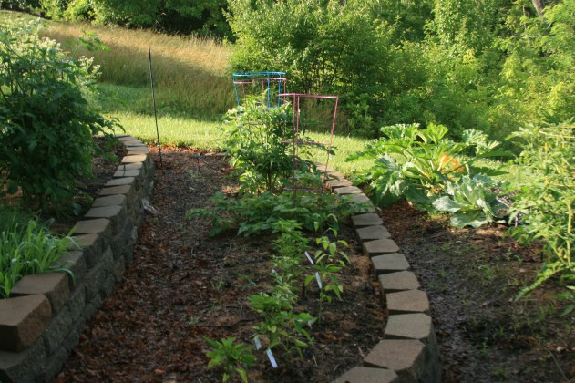 Permaculture small scale terrace