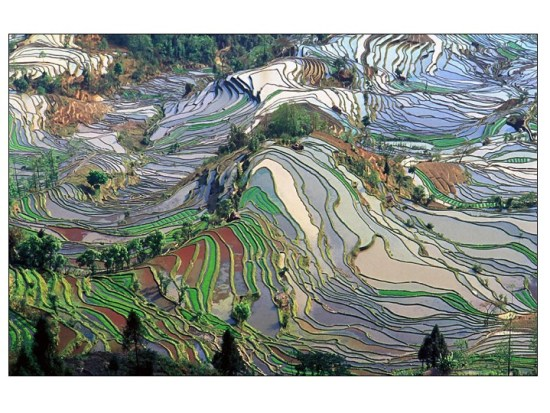 Rice paddies, a form of terraces