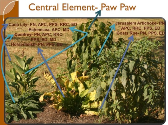 permaculture guild photo with functions