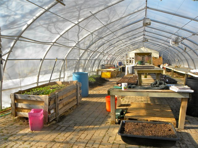 Urban Greens Greenhouse, our propagation center for the urban csa