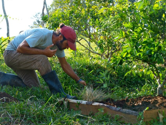 The Author maintaing the herb layer of a tropical food forest, DR 2013