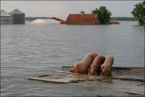 Iowa floods, the heart of the corn and soy belt in the states that floods often because of erasing of natural capitol
