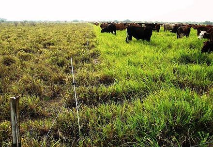 Side by side comparison of standard management (left) and Holistic management (right) planned grazing by the Grazing Lands Conservation Initiative (GLCI), Texas during the drought of 2012