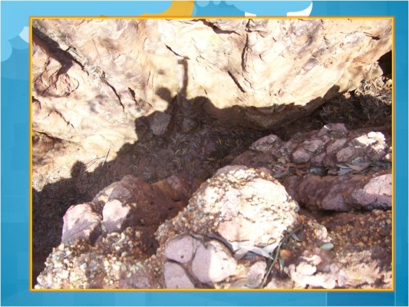 An erosion Gully in the watershed of Sadhana Forest