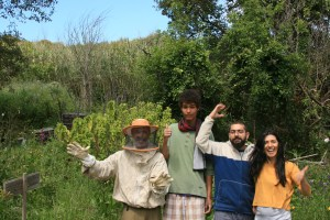 happy swarm harvesting crew from our Spring 2015 PDC at Terra Alta