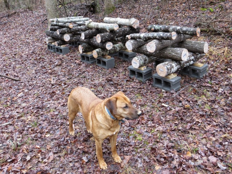 shiitake log cabin stacking