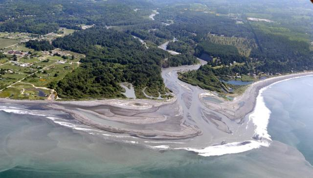 The Estuary of the Elwha River in Washington states Olympic National Park after several dams, including the largest ever removed, and the resulting habitat creating sediment. 75 miles of Salmon habitat runs wild again of rate first time 100 years. credit http://news.nationalgeographic.com/news/2014/08/140826-elwha-river-dam-removal-salmon-science-olympic/
