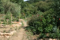 July 2015 camino das fadas, tree crops and support species have grown well