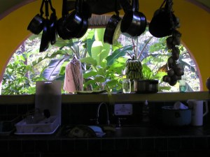 Jungle Hostel kitchen view from 2005, too dense of vegetation