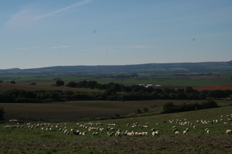 Animal Impact and cycling carbon before tree planting, shepherded sheep