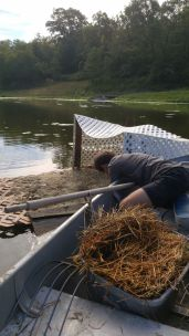 Aaron harvesting the duck manure/ straw blend on the duck island for composting on land and cleaning of the shelter, Treasure Lake, KY