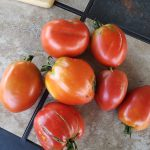 Amish Paste tomatoes harvested from guilds of the Mt Ash