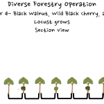 Permaculture Timber and Forestry animation 4