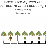 Permaculture Timber and Forestry animation 6